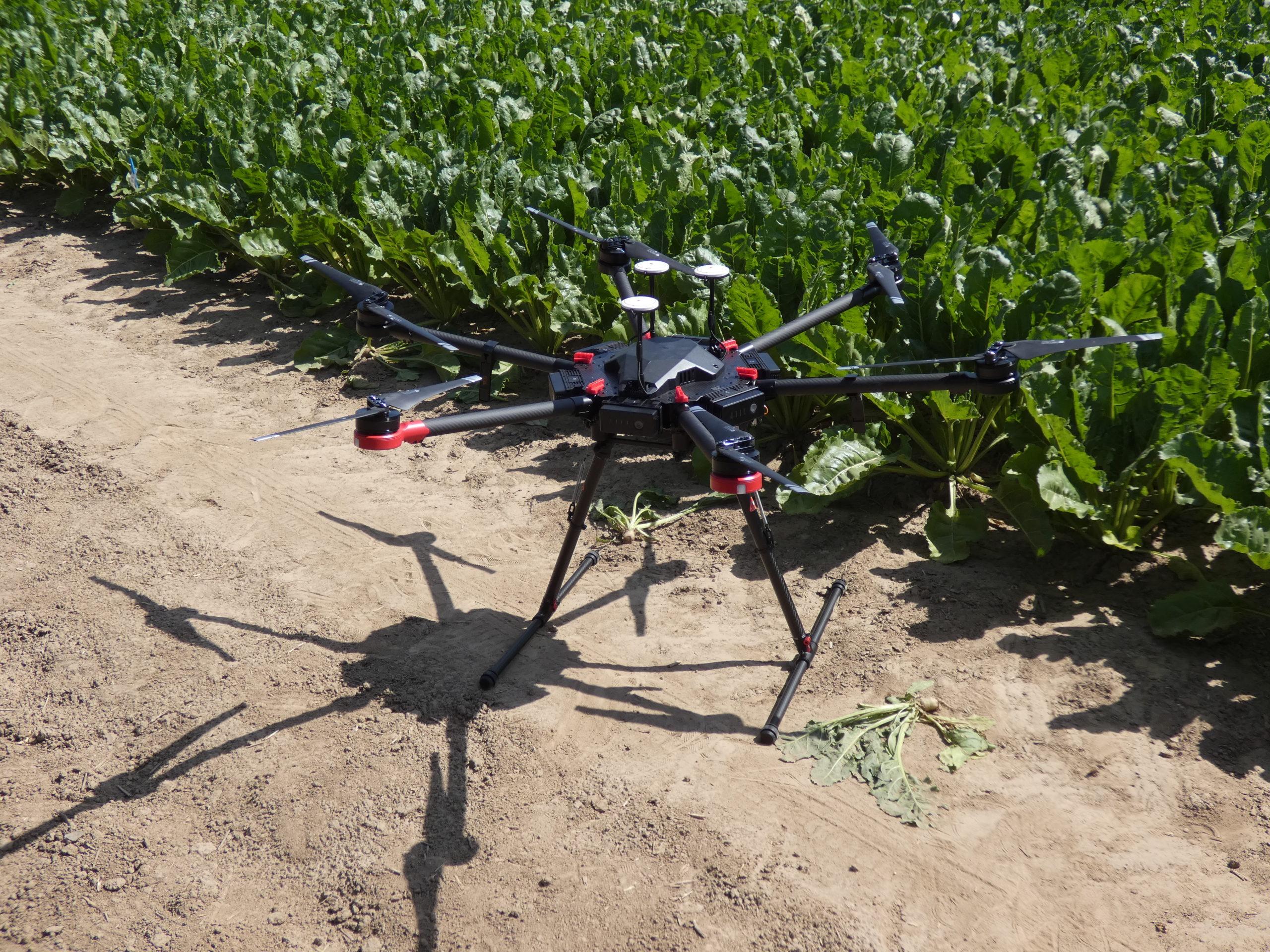 Kann die Drohne Unkräuter von Rüben unterscheiden? Eine von vielen Fragen, die auf dem Versuchsfeld erforscht werden. (Foto: IfZ)